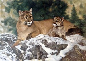Charles Frace - Family Ties print of cougar mother and cub on snowy rocks