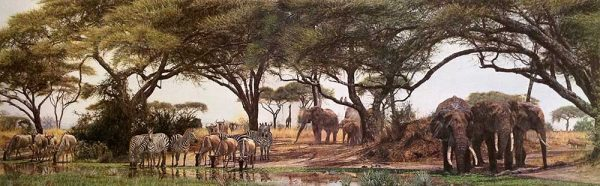 Simon Combes - African Oasis print of animals sharing a watering hole