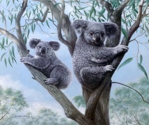 Charles Frace - Ambassadors print of two koalas in branches of a eucalyptus tree