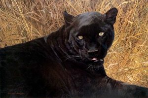 Carl Brenders - Black Sphinx 19x29 lithograph print of a black panther in the grass