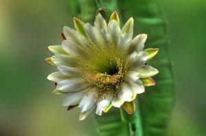 Photo of cactus blossom