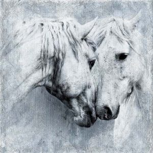 Photograph two white horses