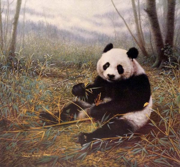 Charles Frace - Chinese Treasure print of a panda bear eating bamboo in a forest
