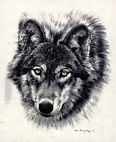 Carl Brenders - Den Mother Pencil Sketch of realistic wolf face