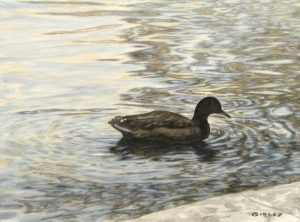 Phil Gidley Painting of Duck on the Water
