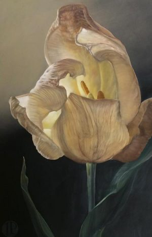 Lorena Pugh oil painting on canvas of delicate white tulip with black background