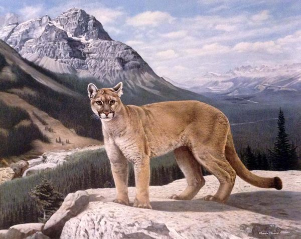 Charles Frace - His Domain print of cougar in front of majestic mountains and valleys