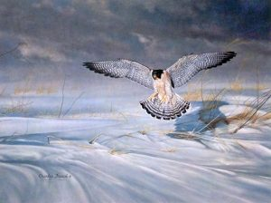 Charles Frace - King's Favorite print of a peregrine falcon about to land in a snowy field