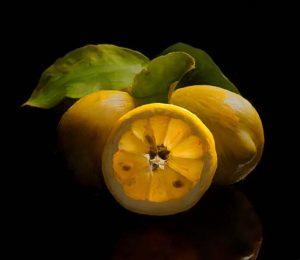 Stephen Rostler - Lemons (32x37 Photograph)