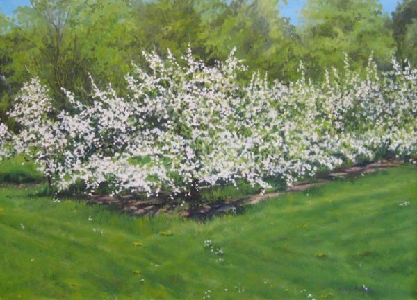 Hilary Baldwin - May Orchard - Realistic painting of apple trees blossoming in an orchard