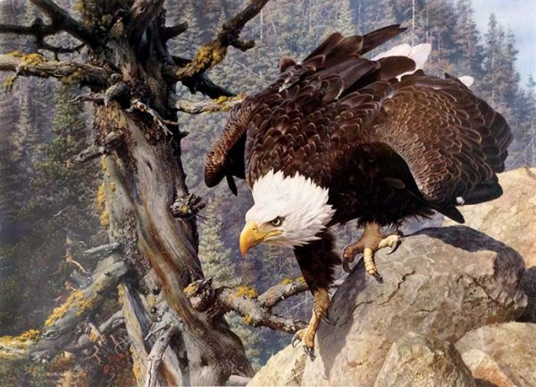 Carl Brenders - The Monarch is Alive print of bald eagle on cliff
