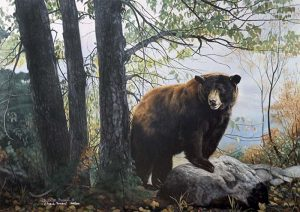 Charles Frace - Morning Watch print of an american black bear next to three trees in a forest