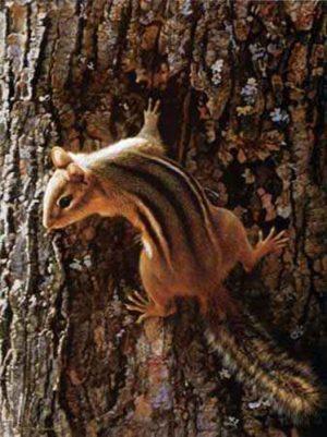 Carl Brenders - Narrow Escape print of chipmunk climbing tree