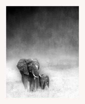 Black and white photo of mother and baby elephant on African plain