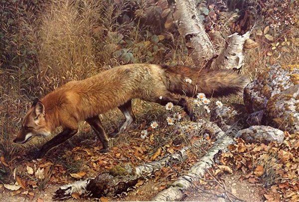 Carl Brenders - Pathfinder print of red fox walking through forest