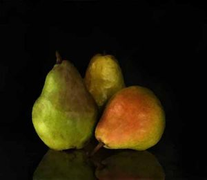 Stephen Rostler - Pears (21x24 photograph on canvas)