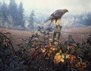 Stephen Lyman Raptor's Watch print of red tailed hawk perched on a fence post waiting for prey