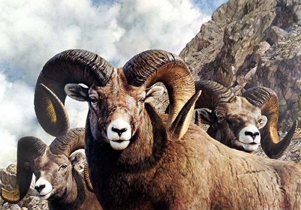 Carl Brenders - Rocky Kingdom print of mountain goats with horns