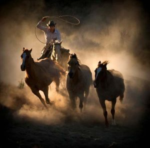 Photo of cowboy with lasso and horses with dust