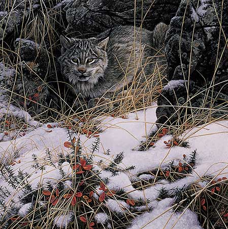 Stephen Lyman - Secret Watch print of lynx waiting for it's prey