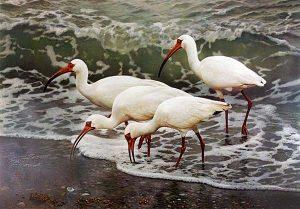 Carl Brenders - Shoreline Quartet print of birds at edge of water