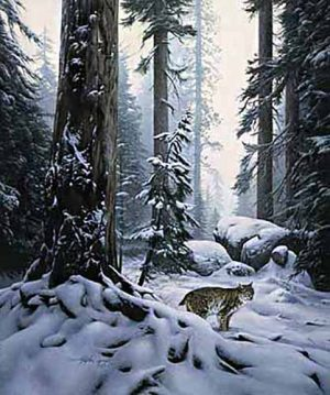 Stephen Lyman - Snow Hunter print of a bobcat in a snowy forest
