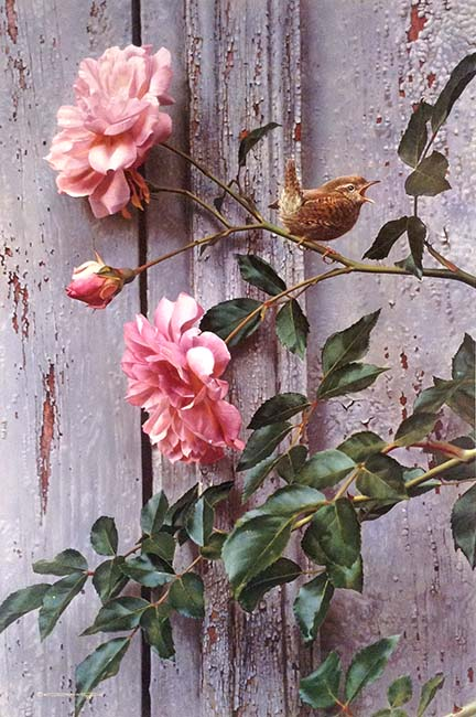 Carl Brenders - Summer Roses print of a small bird perched on flowers against wood