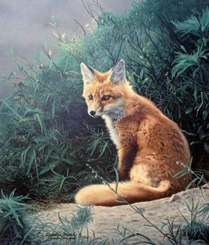 Charles Frace - Taking a Break print of a fox sitting among shrubs looking a little tired