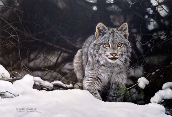 Charles Frace - The Chase print of canadian lynx in the snow intent on pursuit