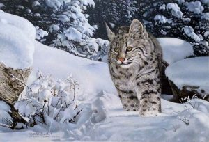 Charles Frace - The Quest print of bobcat in snow covered forest