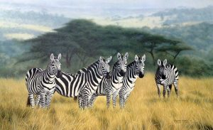 Charles Frace - Undivided Attention print of 5 zebras standing in the african sahara plain with tall grass and trees
