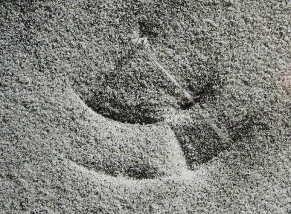 Peter Dreyer - Dune Grass #1 (11x14 photograph)