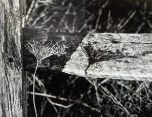 Peter Dreyer - Katama Fence (11x14 photograph)