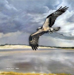 Charles Frace - Safe Return print of osprey flying over water with storm clouds in the sky