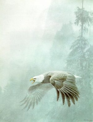 Robert Bateman - Vigilance (31x24 lithograph on paper)