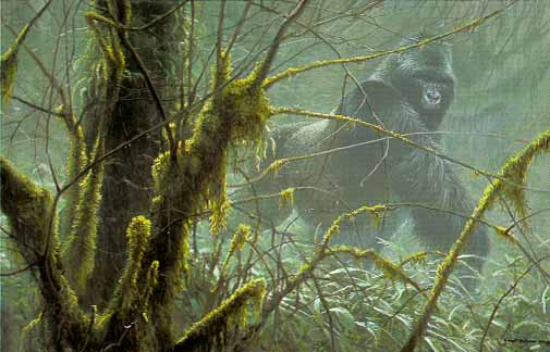 Robert Bateman - Intrusion - Mountain Gorilla (22x32 lithograph on paper)