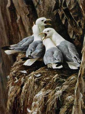Robert Bateman - Kittiwake Greetings (16x11 lithograph on paper)
