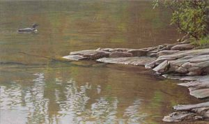 Robert Bateman - Morning Cove (16x19 lithograph on paper)