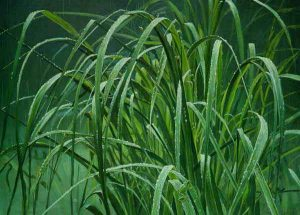 Robert Bateman - Beach Grass and Tree Frog (19x26 lithograph on paper)