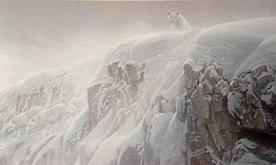 Robert Bateman - Arctic Cliffs print of a white wolf standing atop a snowy cliff edge