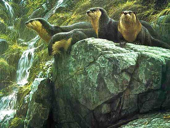 Robert Bateman - On the Brink print of 4 otters on a rock