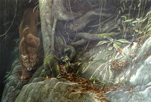 Robert Bateman - Path of the Panther print of panther on rock among jungle plants