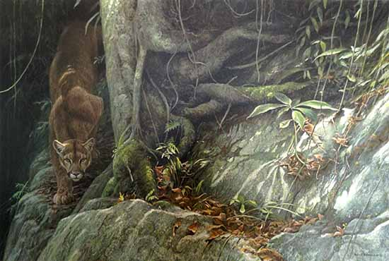 Robert Bateman - Path of the Panther print of panther on rock among jungle plants