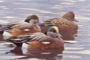 Robert Bateman - Peaceful Flock print of American Widgeon ducks