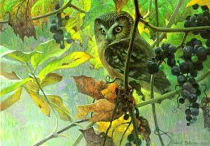 Robert Bateman - Saw Whet Owl & Wild Grapes