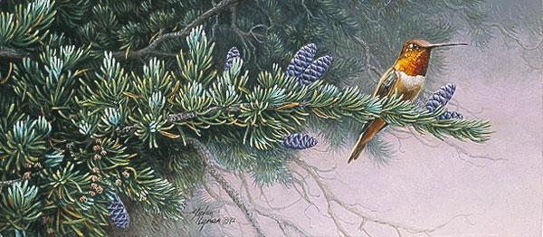 Stephen Lyman - Wildflower Suite Rufous Hummingbird