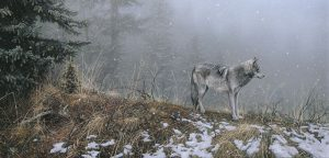 Stephen Lyman - Silent Snows print of timber wolf on snowy ridge