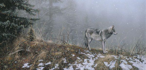 Stephen Lyman - Silent Snows print of timber wolf on snowy ridge