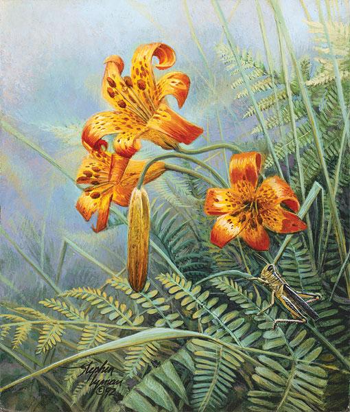 Stephen Lyman - Tiger Lillies and Grasshopper