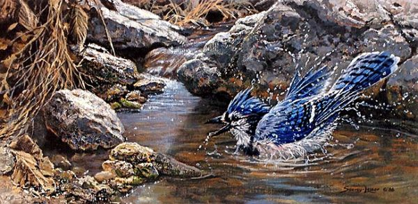 John Seery-Lester - print of small bird splashing in water surrounded by rocks